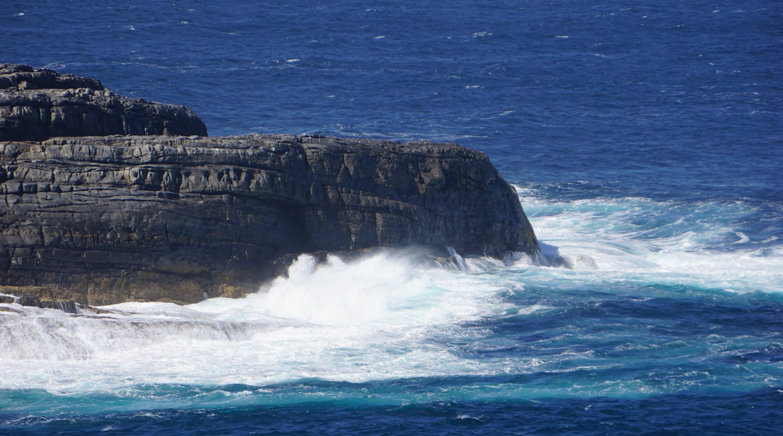 Kangaroo coastline